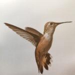 Diana Landry-Hovering Hummingbird