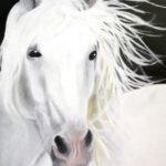 Stephen Teitler-White Horse